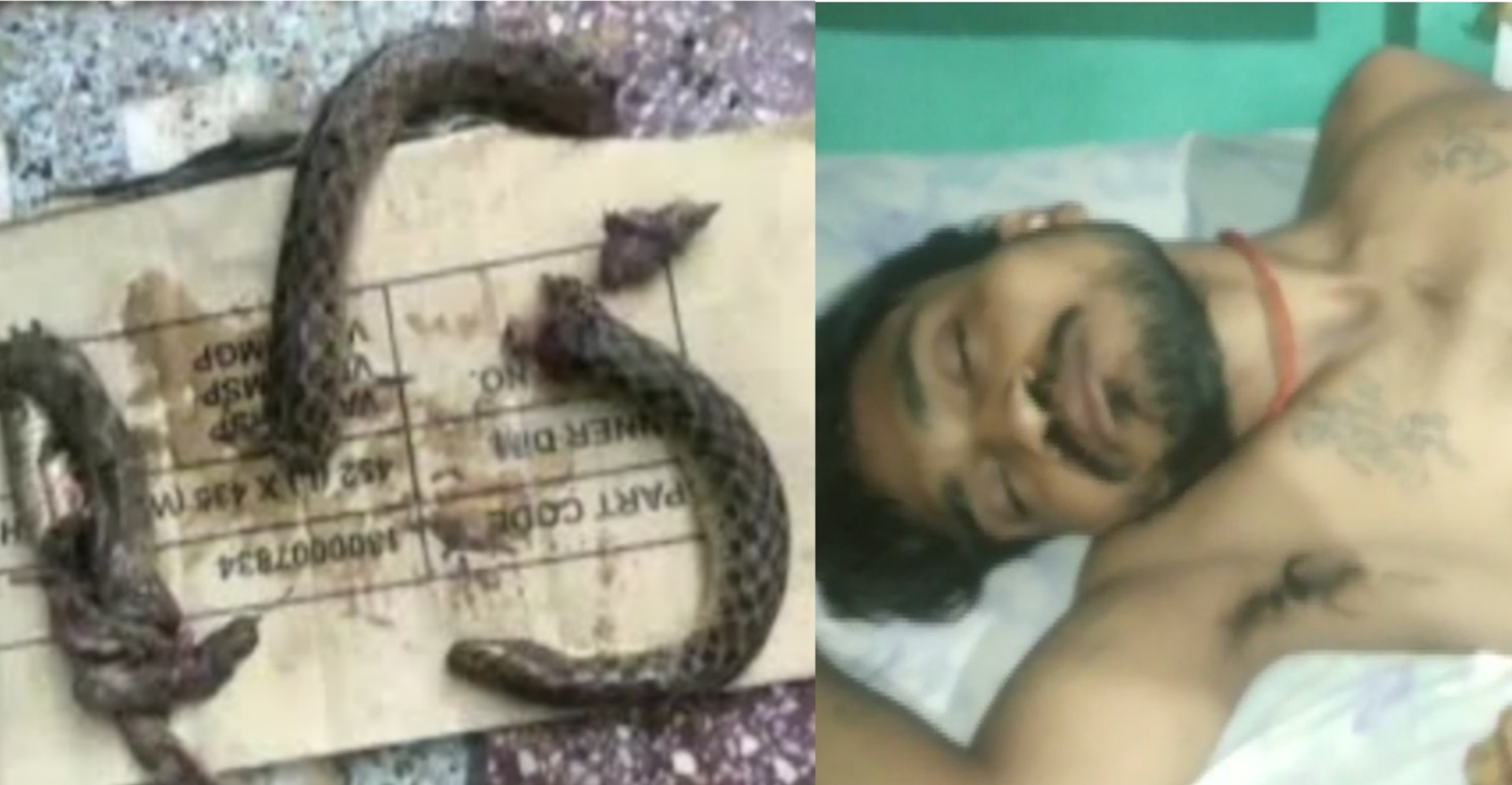 A drunken man bit a snake into pieces as it attacked him